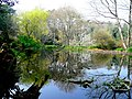 Pine Lodge Gardens 2 - geograph.org.uk - 1240123.jpg