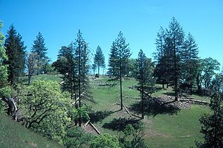 Henry W. Coe State Park State park in California, USA