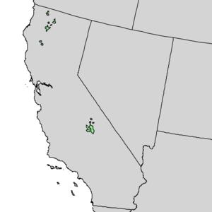 Pinus balfouriana - Image: Pinus balfouriana range map 1