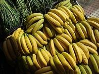 Plátanos de Canarias.JPG