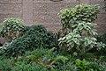 Plantes del jardí de Bombas Gens, València.jpg
