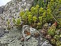 Plants of Artavaz 33.jpg