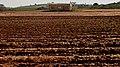 Ploughed Field, Roses Valey, Shfela, Israel שדה חרוש, עמק השושנים, שפלת יהודה - panoramio (3).jpg
