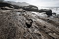 Point Lobos State Natural Reserve 1 18 19 (32962071228).jpg
