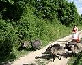 Poland. Sierpc. Open air museum, (Skansen) 003.jpg