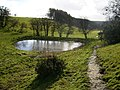 Pond south of Ebberston Common House - geograph.org.uk - 337389.jpg