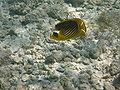 Port Ghalib march 2006-0198.jpg