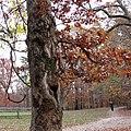 Post Oak (30361656693).jpg