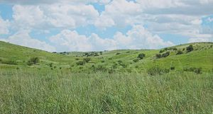 Cienega Valley (Arizona) - Image: Prairie Near Hummel Ranch House Cienega Valley Arizona 2014