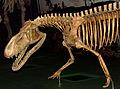 Prestosuchus chiniquensis, ROM.jpg