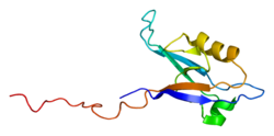Protein PPP1R9B PDB 2g5m.png