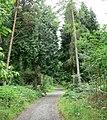 Public footpath through Eymore Wood - geograph.org.uk - 493526.jpg