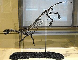 Puijila - Restored skeleton