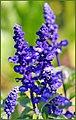 Purple Factor (261439225).jpeg