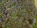 Rövarekulan Forest Drone Shot.jpg
