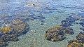 Ragged Cove - Witless Bay, Newfoundland 2019-08-12 (03).jpg