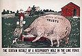 Reciprocity pigs.jpg