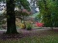 Red Leaves in the Rain, Batsford Arboretum (4) - geograph.org.uk - 1539000.jpg