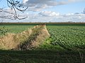 Reedy ditch across Crowmere - geograph.org.uk - 1579135.jpg