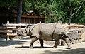Rhinoceros unicornis - Tiergarten Schönbrunn.jpg
