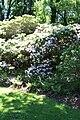 Rhododendronpark Bremen 20090513 046.JPG