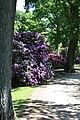 Rhododendronpark Bremen 20090513 149.JPG