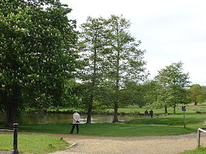 Sudbrook (stream) - Ham Gate Pond, fed by Sudbrook