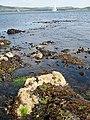 Rocks and seaweed at Farland Point - geograph.org.uk - 1912675.jpg