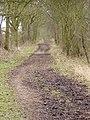 Roman Road, Mount End, Essex - geograph.org.uk - 79048.jpg