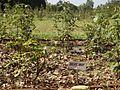 Rose garden grass.jpg