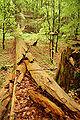Roztoczanski park narodowy 013a.jpg