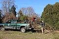 SB VSCC boxwood restoration at Mulberry Hill (16150734695).jpg