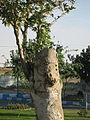 Sadeghi sq - Khayyam boulevard - Nishapur 08.JPG