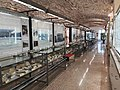 Sala espositiva sezione paleontologica.jpg