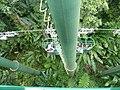 Sankt Lucia - panoramio - georama (35).jpg
