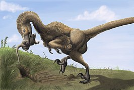 Saurornitholestes digging Burrows wahweap.jpg
