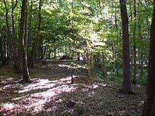 A photograph of a densely wooded deciduous forest