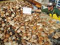 Scallop dredge catch.jpg
