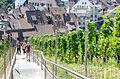 Schaffhausen (9642443427).jpg