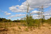 Schleswig-Holstein, Bad Bramstedt, Katenmoor NIK 5985.jpg