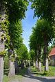 Schleswig-Holstein, Haseldorf, Naturdenkmal 24-02 NIK 4183.JPG
