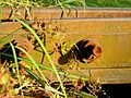 Screw and close up of a rail track - panoramio.jpg