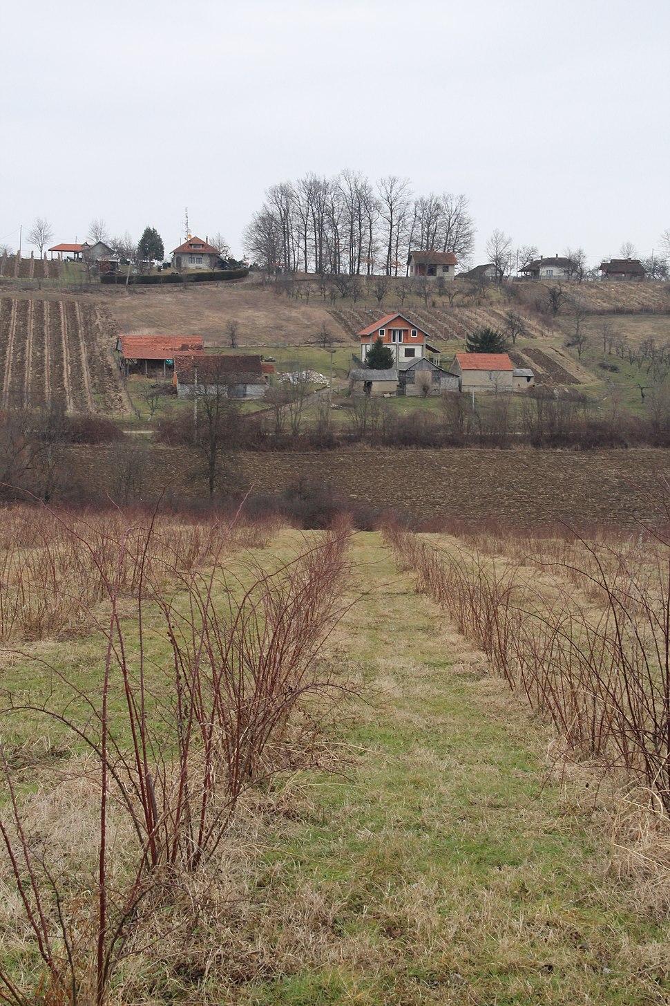 Selo Mrčić - opština Valjevo - zapadna Srbija - Panorama 6 - Pogled prema istoku