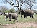 Serengeti 12 (14698286144).jpg