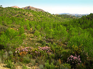 Serra Calderona - Landscape in the heart of the Calderona Range