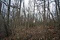 Shearnfold Wood - geograph.org.uk - 1765241.jpg