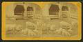 Sheep & lambs, by Kilburn Brothers 2.png