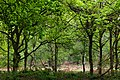 Sherwood Forest, May, 2017-1.jpg