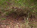 Shrub in the muddy bank - panoramio.jpg