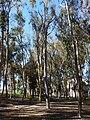 Singing Tree, UCSD.JPG